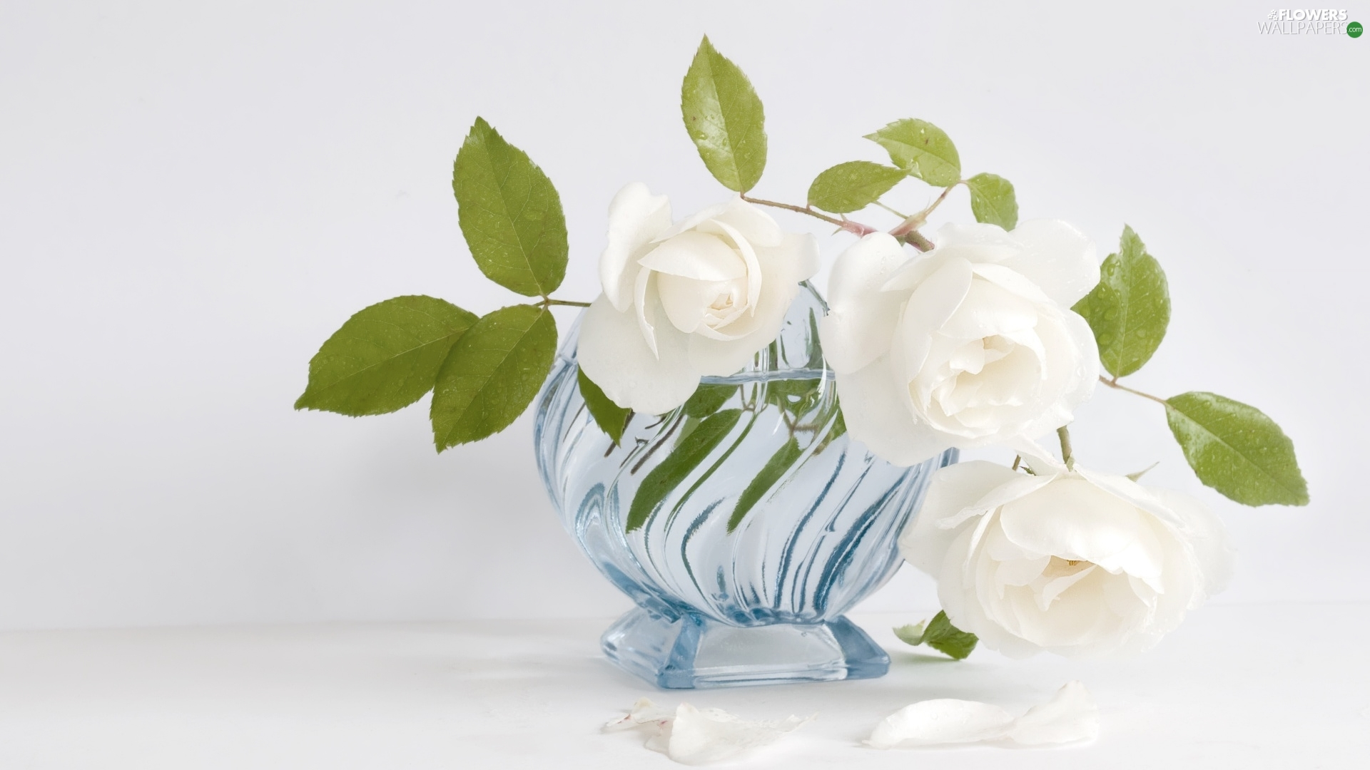 blue, Vase, White, roses, Three