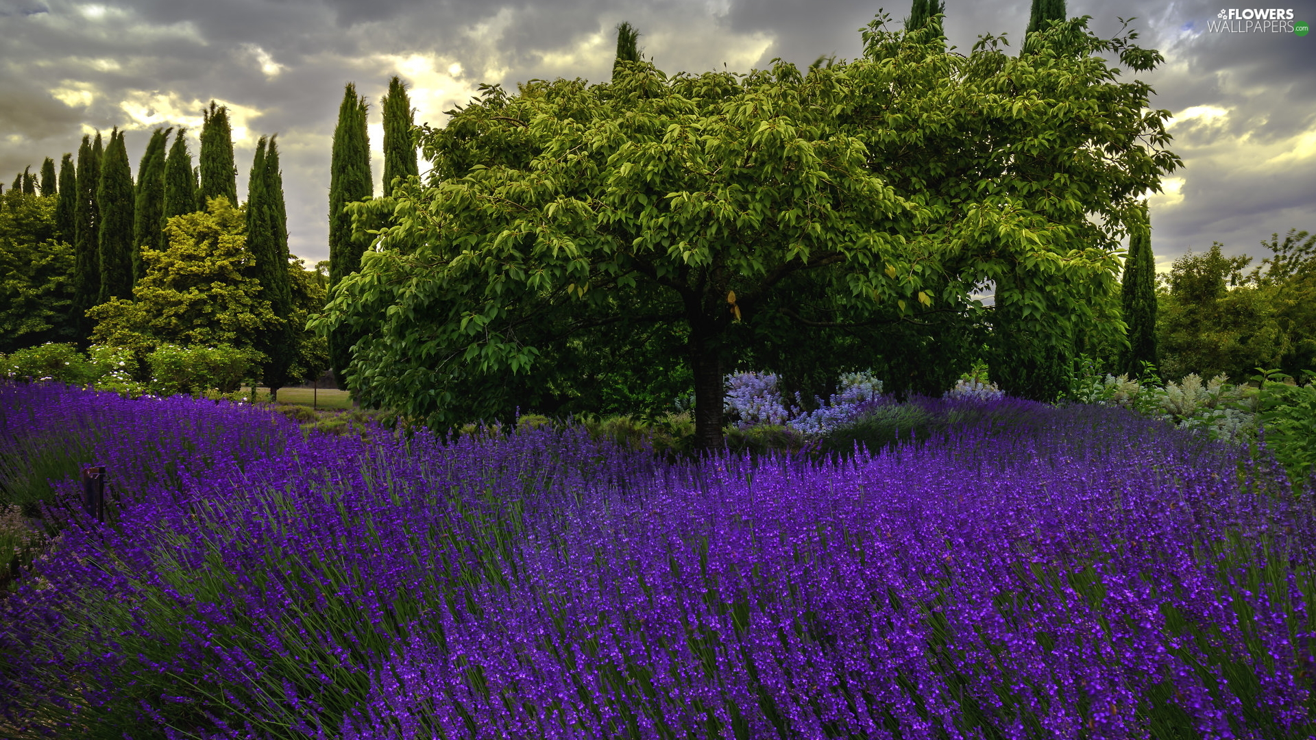 trees, lavender, clouds, viewes