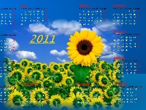Sunflower, Calendar 2011