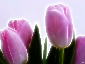 3D, Pink, Tulips