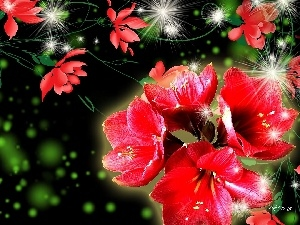 graphics, Flowers, amaryllis, Red