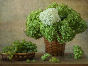 composition, Grapes, Baskets, hydrangeas