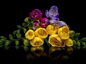 color, black background, reflection, Freesias