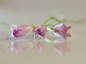 Flowers, reflection, blur, bindweed