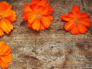 board, Orange, Flowers