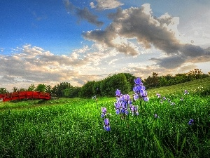 viewes, Meadow, bridges, Irises, Red, trees