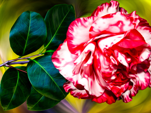 graphics, Colourfull Flowers, camellia