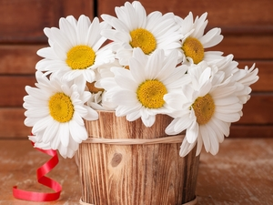 Flowers, Wooden, pot, camomiles