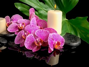 Flowers, Candles, Stones, orchids