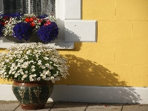 Window, lobelia, chamomile, pots
