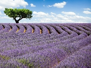 Field, trees, clouds, lavender