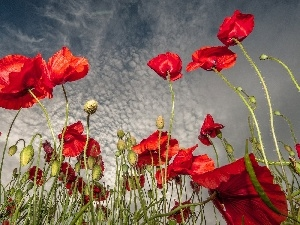 clouds, Red, papavers