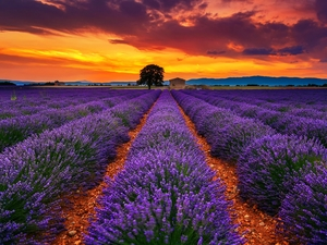 Great Sunsets, lavender, clouds