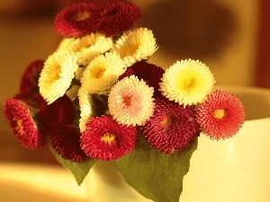 Daisies, small bunch, Colorful