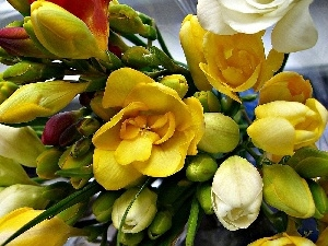 freesia, small bunch, Colorful