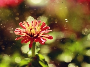 Rain, Red, Colourfull Flowers