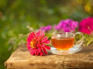 zinnia, blurry background, tea, Colourfull Flowers, cup