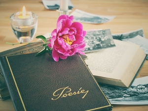 peony, Books, Candle, composition, photos, Colourfull Flowers