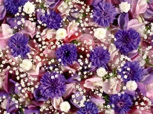 color, Flowers, cornflowers, different