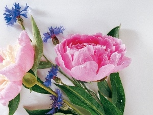 cornflowers, Peonies, flowers, Blue, bouquet