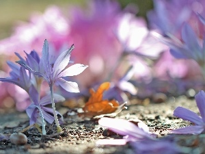 crocuses, colchicums, Autumn