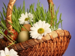Easter, eggs, daisy, basket