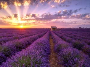 clouds, Great Sunsets, Field, house, lavender