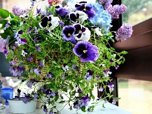 Flower, pansies, composition