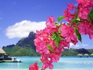 Flowers, Bougainvillea, Tropical, Platforms, sea