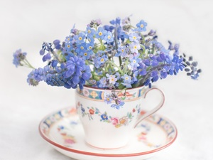 cup, Forget, Muscari, Flowers