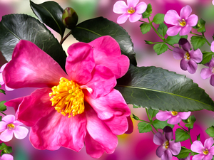 change, Colourfull Flowers, Flowers, graphics, Pink, camellia