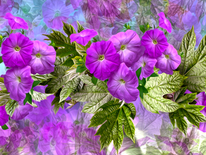 graphics, petunias, purple, Flowers