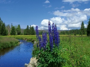 River, Mountains, Flowers, woods