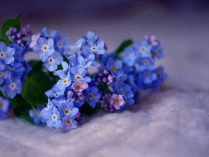 small bunch, forget-me-not