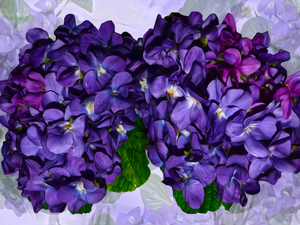 bouquets, fragrant violets, graphics, Flowers
