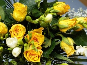 Yellow, White, Freesias, roses