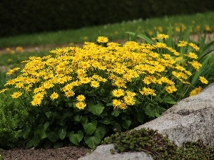 Yellow, ##, garden, Flowers