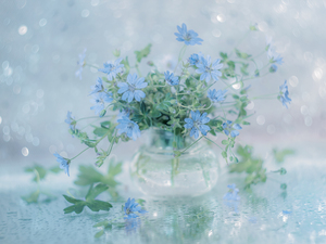 geranium, Blue, Flowers