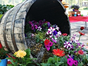 gerberas, petunias, composition, Flower, barrel