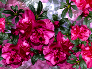 graphics, Flowers, camellia