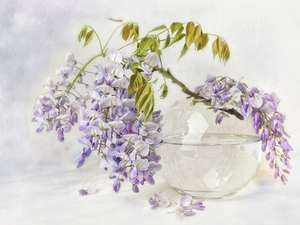 wistaria, graphics, Twigs, Flowers, vase