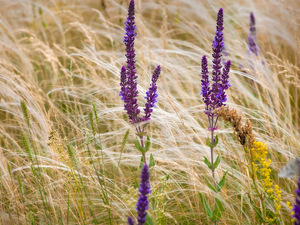 grass, Flowers, lavender
