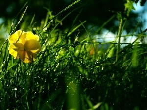grass, Yellow, pansy