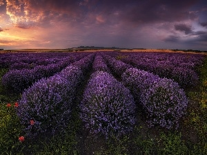 Bulgaria, lavender, Great Sunsets, Field