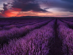 Field, Great Sunsets, clouds, lavender