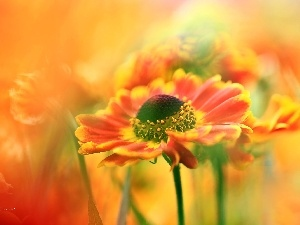 Helenium, Red, Flowers
