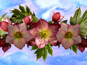 Flowers, leaves, graphics, Helleborus