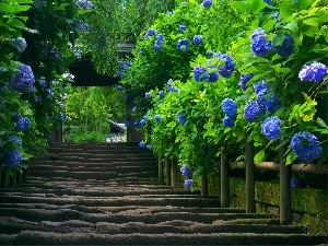 old, Blue, hydrangea, Stairs