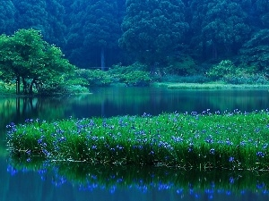 Irises, lake, forest