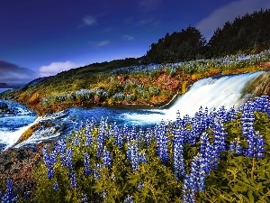 lakes, The Hills, lupine, trees, Flowers, inflow, River, viewes